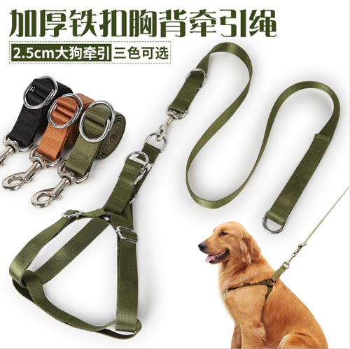 Nuôi chó Becgie nên sử dụng các loại dây dắt có đai đeo ngực