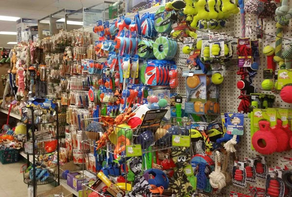 Ở Tỉnh Hải Dương cũng có khá nhiều shop bán phụ kiện dành chó thú cưng, chó mèo