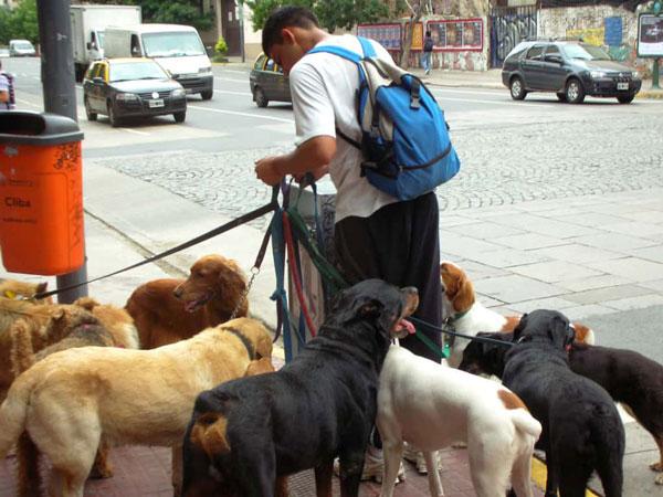 Dịch vụ dắt thú cưng đi dạo đang nở rỗ ở các nước phát triển