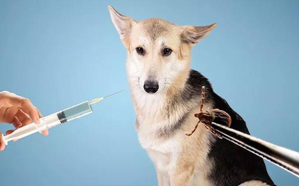 Sử dụng thuốc tiêm trị ve chó có thể gây một số nguy hiểm cho chó mèo về sau